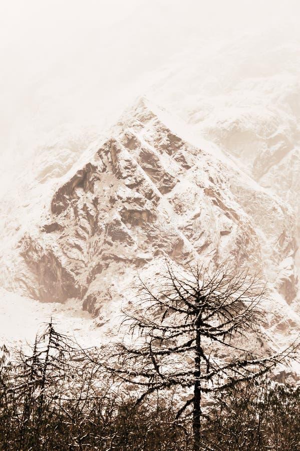 Majestätiska vita granar som glöder vid solljus Träd som täckas med vit fluffig snö som är frostig på en härlig dag, bland höga b royaltyfria bilder