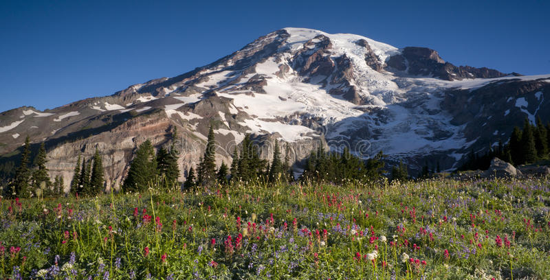Majestätiskt Snowcapped bergmaximum Mt. Rainier Wildflowers Cascad royaltyfria bilder