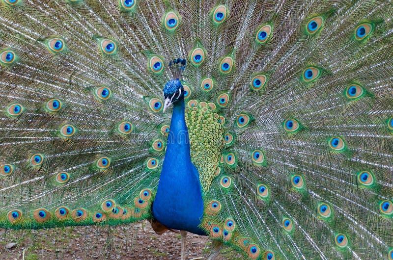 Majestad de colores imagen de archivo