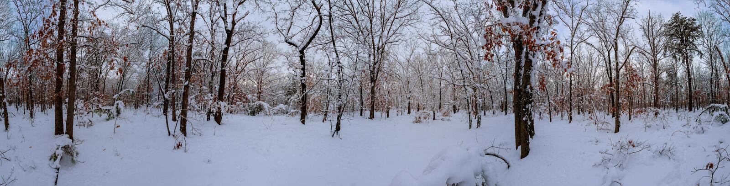 Majestatyczne białe świerczyny jarzy się światłem słonecznym Malownicza i wspaniała mroźna scena Lokaci miejsca Karpacki park nar zdjęcia stock
