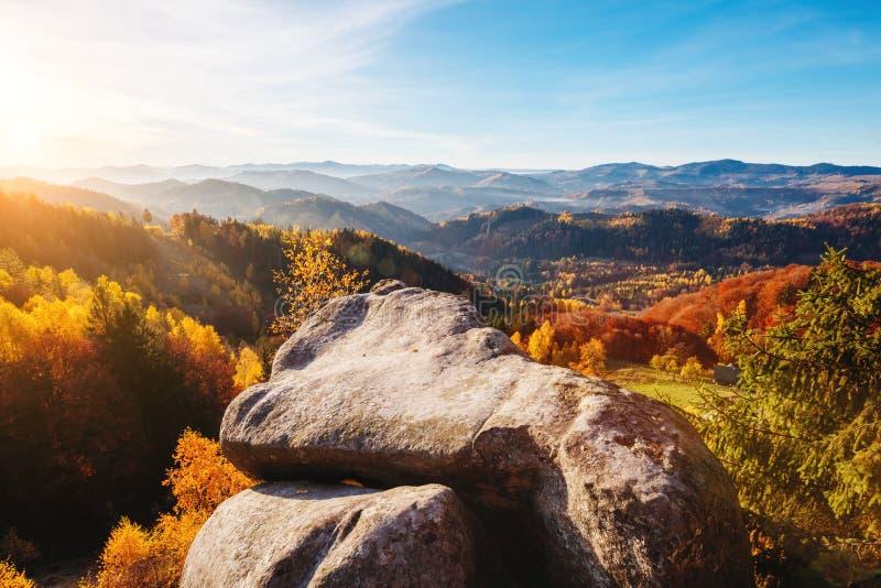 Majestatyczni drzewa z pogodnymi promieniami przy halną doliną Lokacj śliwki obraz stock