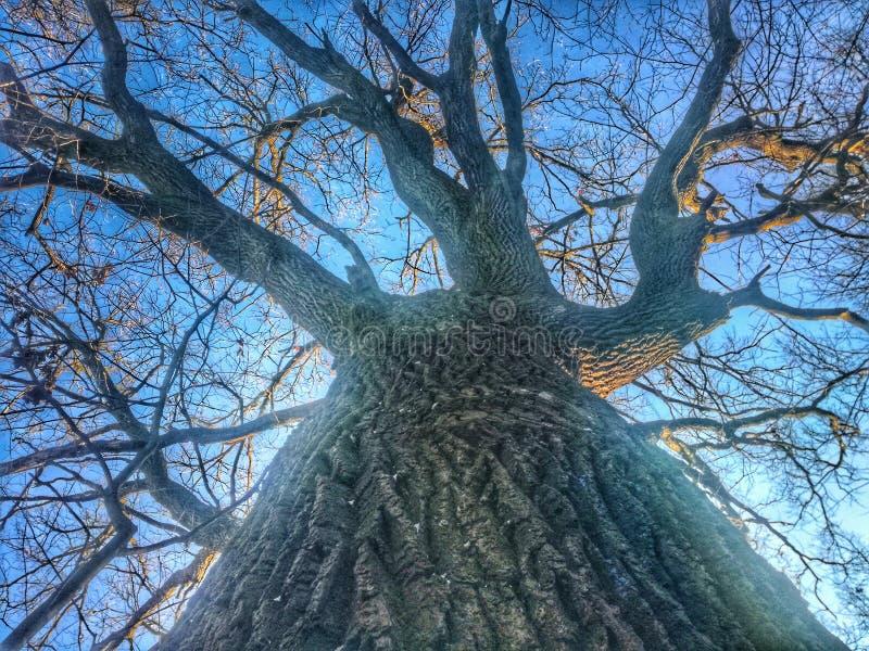 Majestatyczny drzewo zdjęcia royalty free