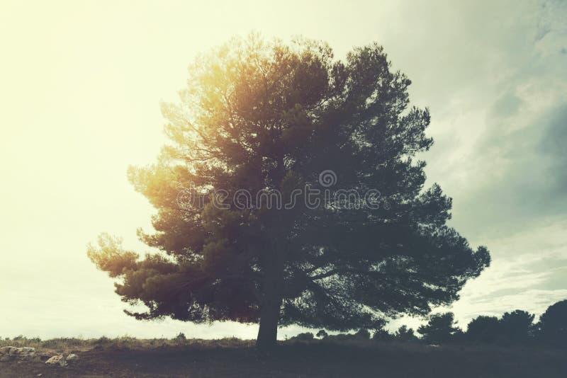 majestatyczny drzewo stoi out w niebie w surrealistycznym krajobrazie zdjęcia royalty free
