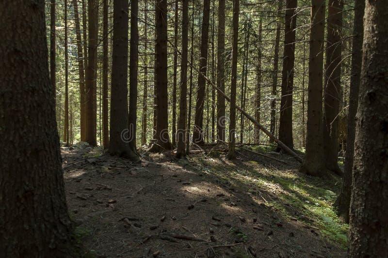 Majestatyczny halny odgórny przerastający z iglastym lasem, doliną, halizną i ścieżką, Rila góra zdjęcia stock
