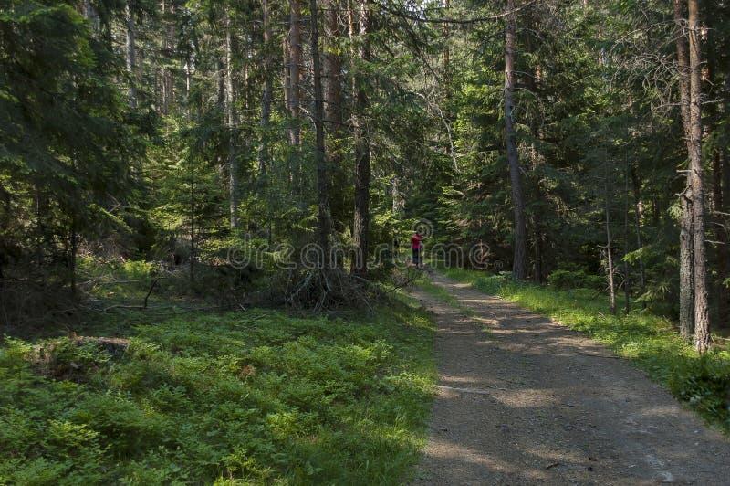 Majestatyczny halny odgórny przerastający z iglastym lasem, doliną, halizną i ścieżką, Rila góra zdjęcie royalty free