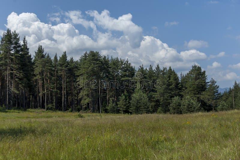Majestatyczny halny odgórny przerastający z iglastym lasem i halizną, Rila góra zdjęcia royalty free