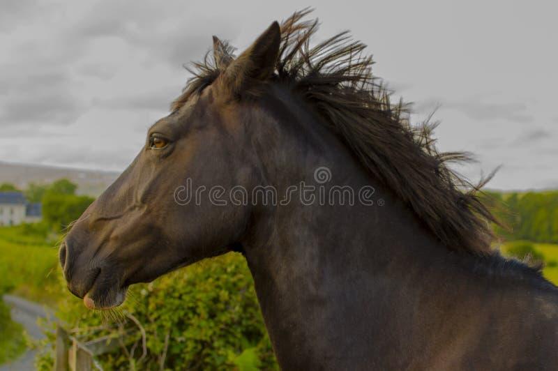 Majestatyczny koń obraz stock