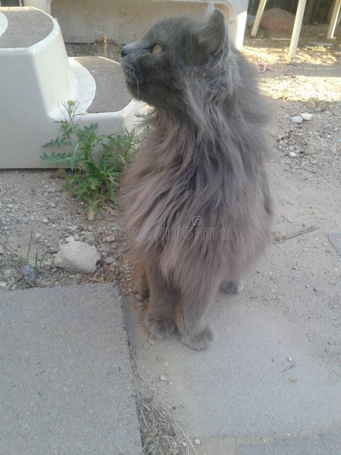 Majestatyczny kot zdjęcie stock