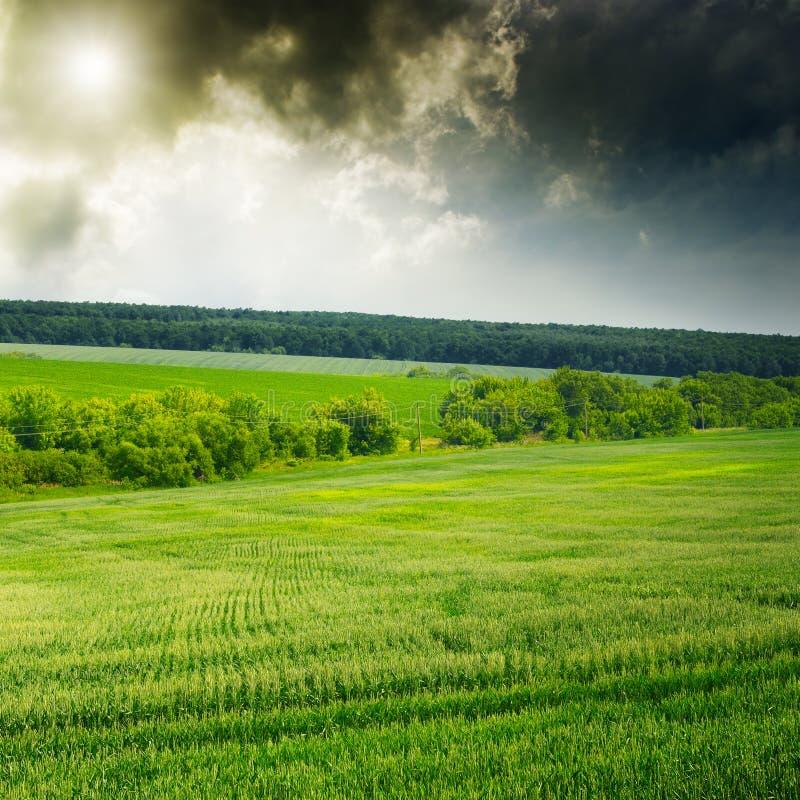 Majestatyczny wschód słońca nad pszenicznym polem fotografia royalty free