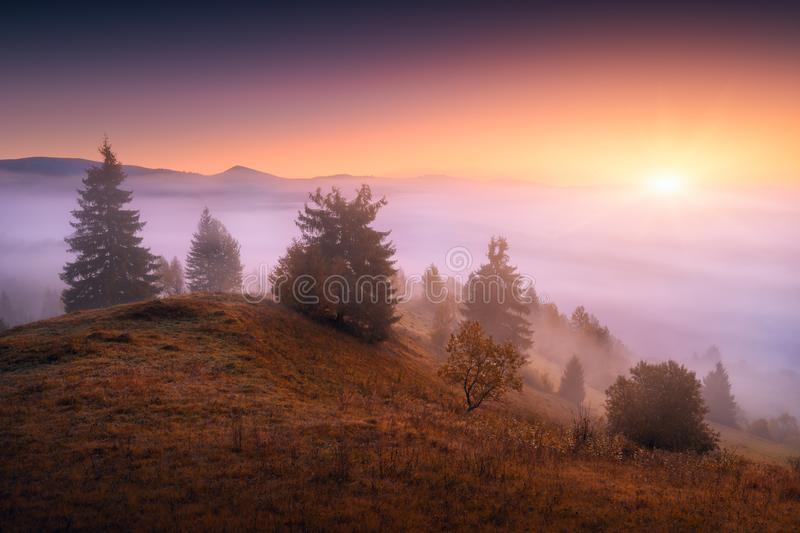 Majestic alpine valley. Beautiful countryside view of alpine carpathian mountain valley covered with fog. Grassy hills and meadows illuminated by morning stock images