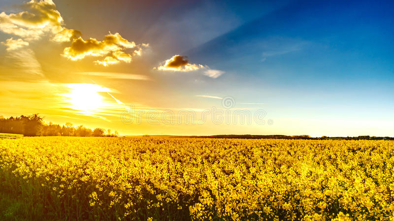 Majestic colorful sunset over the yellow fields. Natural landscape royalty free stock image