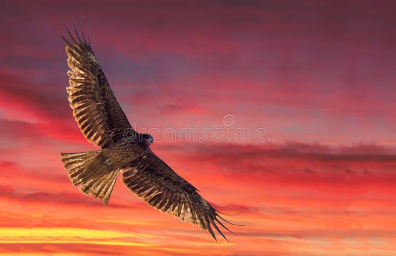 Eagle flyign gover  KATSURA  River  KYOTO stock photo