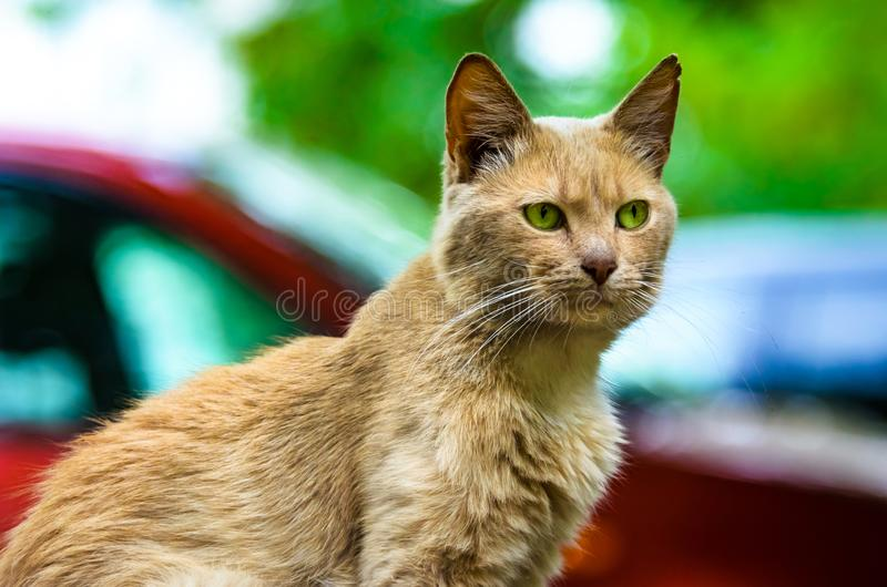 Majestic ginger cat on the street against the background stock photos