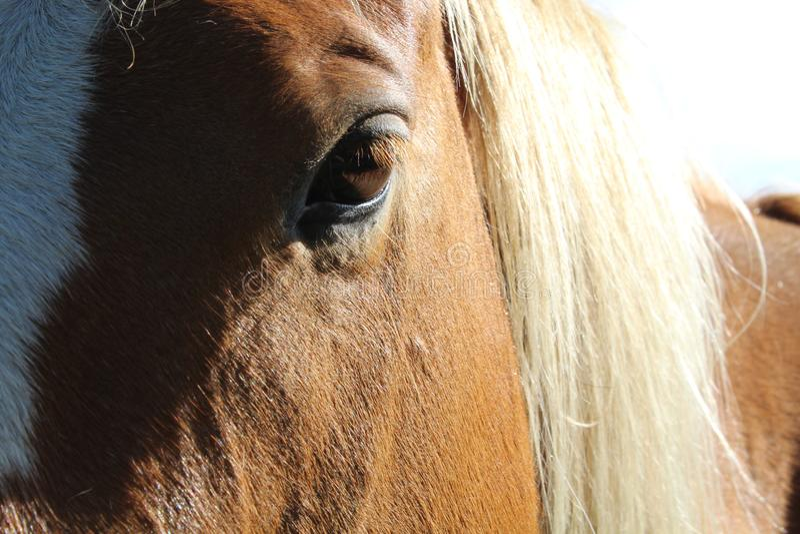 Majestic Horse. Eye royalty free stock photography