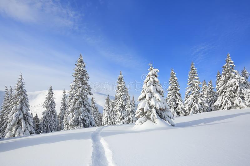 Majestic landscape in the cold winter morning. The wide trail. Christmas forest. Wallpaper background. stock image