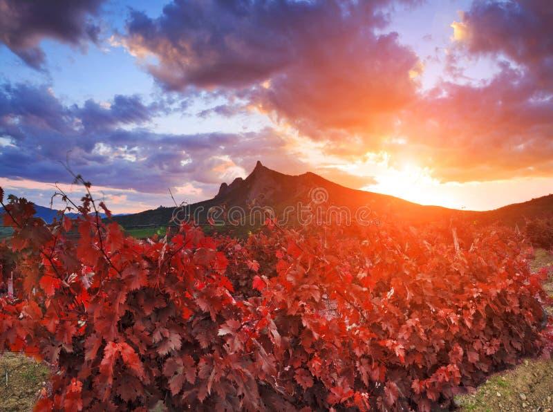 Majestic landscape with vineyards at sunset. stock photo