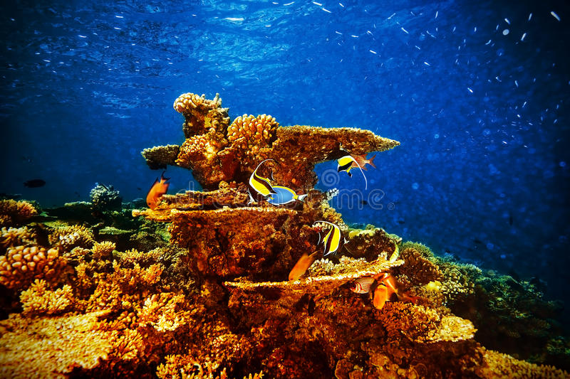 Majestic marine life. Beautiful natural background, coral garden and many exotic fishes under transparent water, beauty of nature concept royalty free stock photography