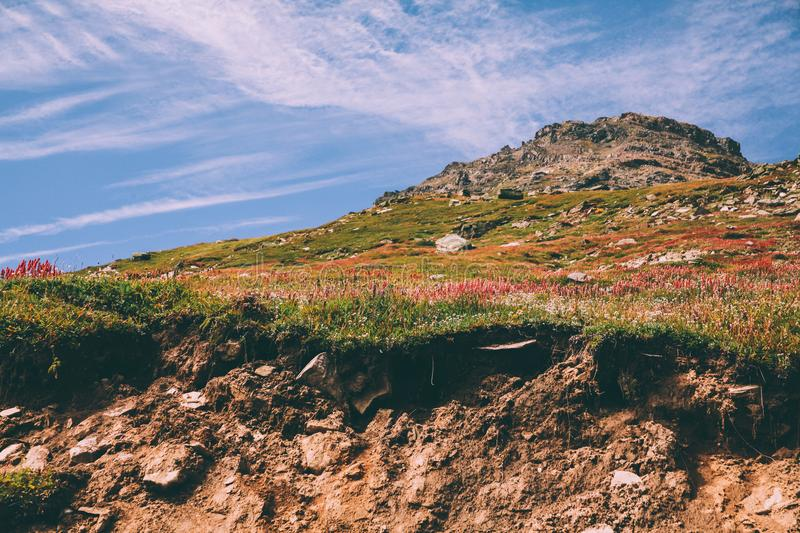 majestic mountain landscape with beautiful blooming flowers in Indian Himalayas, royalty free stock images