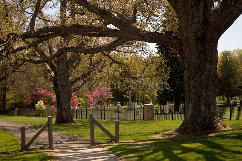 Download Majestic Oaks Guard A Cemetery Stock Image - Image of flowers, spring: 119167