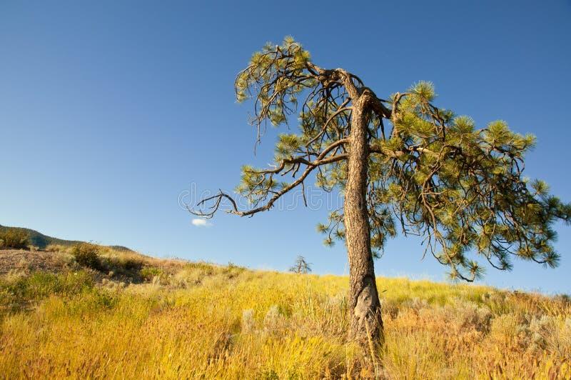 Majestic tree with blue sky
