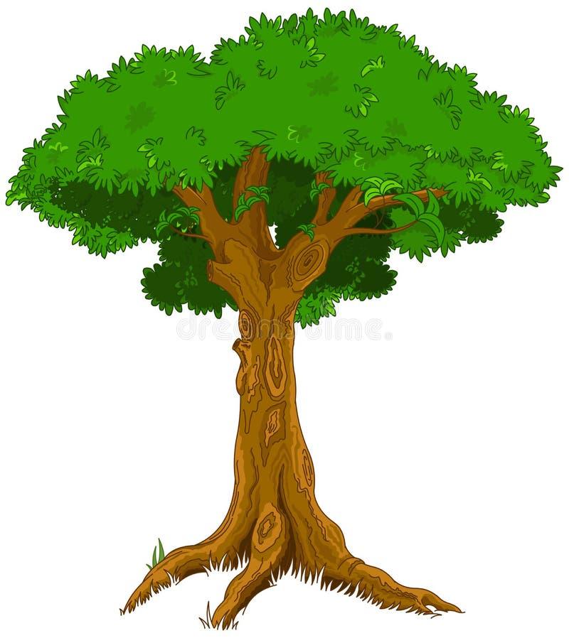 Majestic tree. Illustration of majestic foliate tree stock illustration