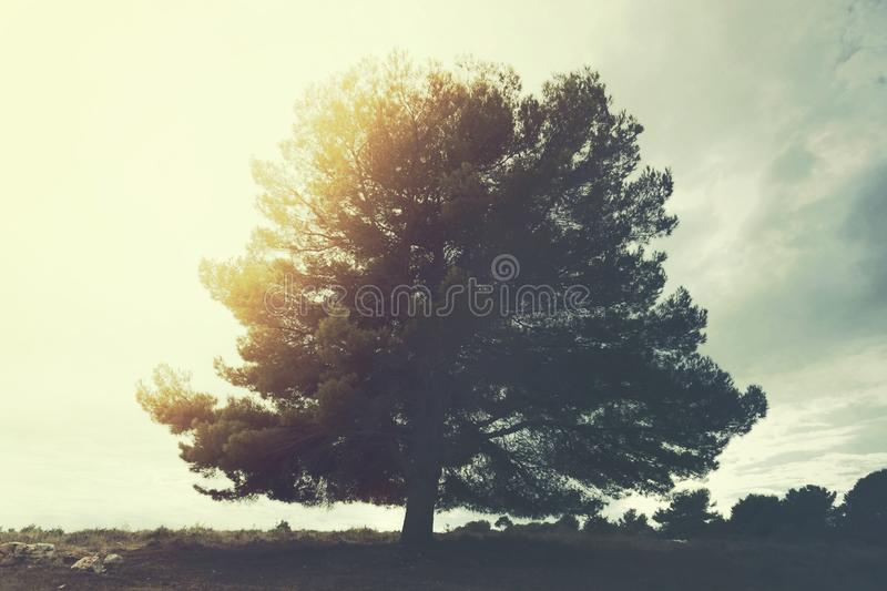 majestic tree stands out in the sky in a surreal landscape royalty free stock photos
