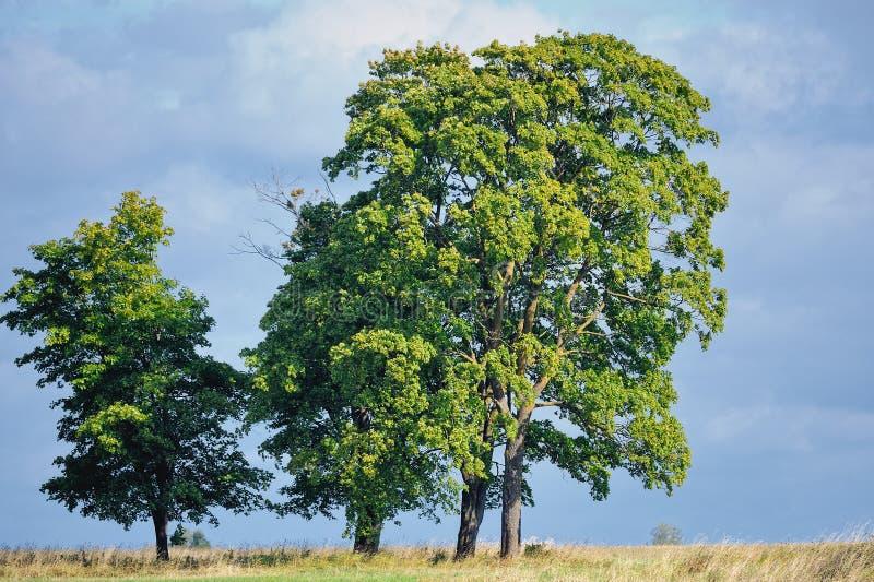 Majestic Trees Stock Photos