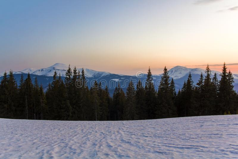 Majestic view of Carpathian mountains at sunrise or sunset. Valley covered with clean snow, transparent fresh air, dense evergreen stock image