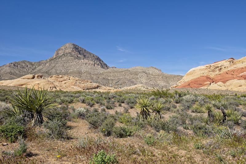 Majestic Mountains in the background at Red Rock Canyon Nature Conservancy royalty free stock image