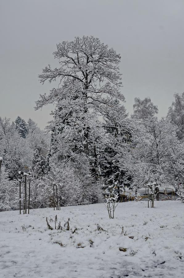 Majestic view of snowy trees and child nook in winter park, Bankya royalty free stock image