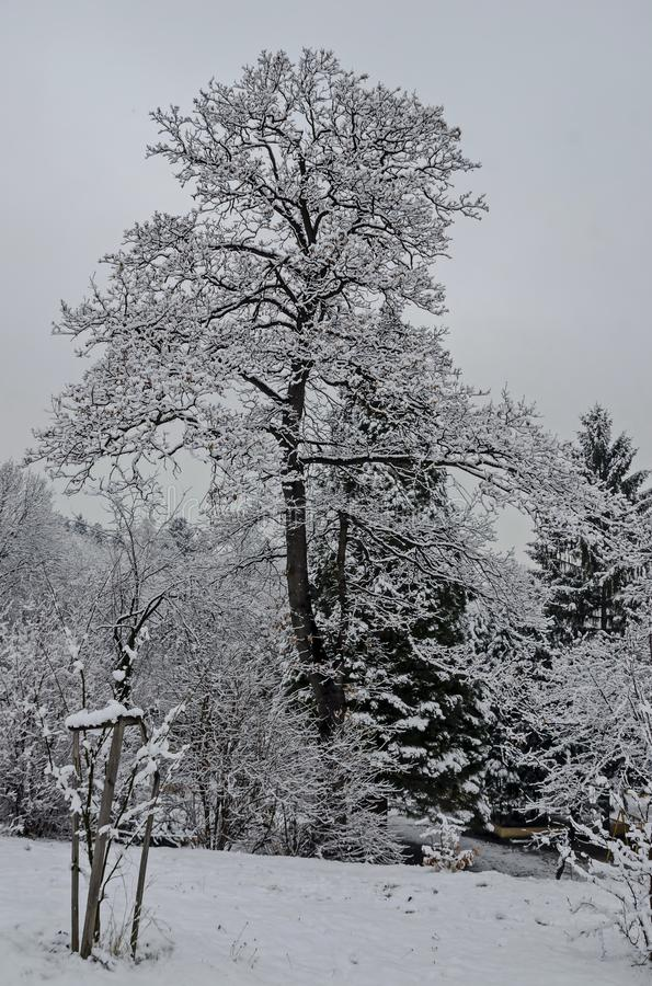 Majestic view of snowy trees and child nook in winter park, Bankya stock images