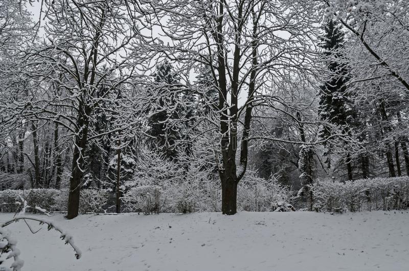 Majestic view of snowy trees in winter park, Bankya stock photo