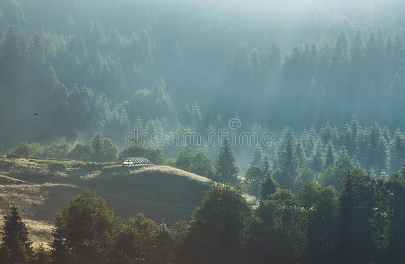Majestic view of the woods glowing by sunlight at twilight. Dramatic and picturesque morning scene. royalty free stock photos