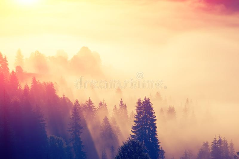 Majestic view of the woods glowing by sunlight at twilight stock photos