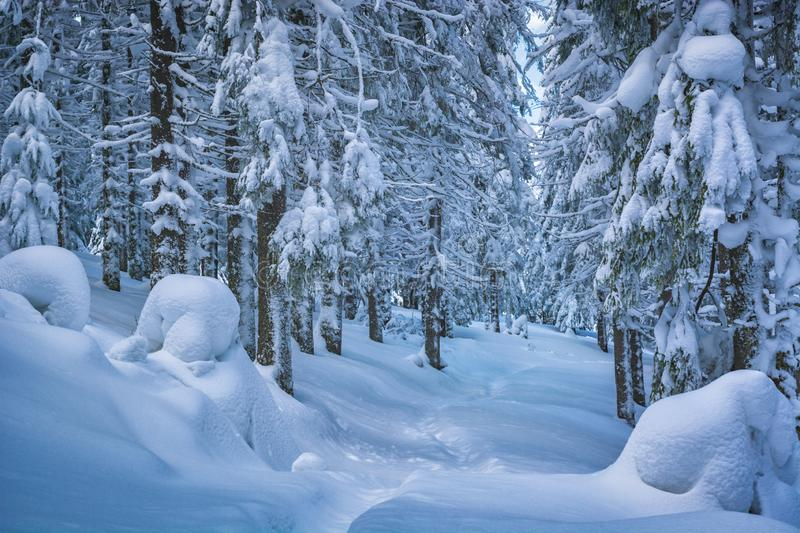 Majestic winter forest stock photo