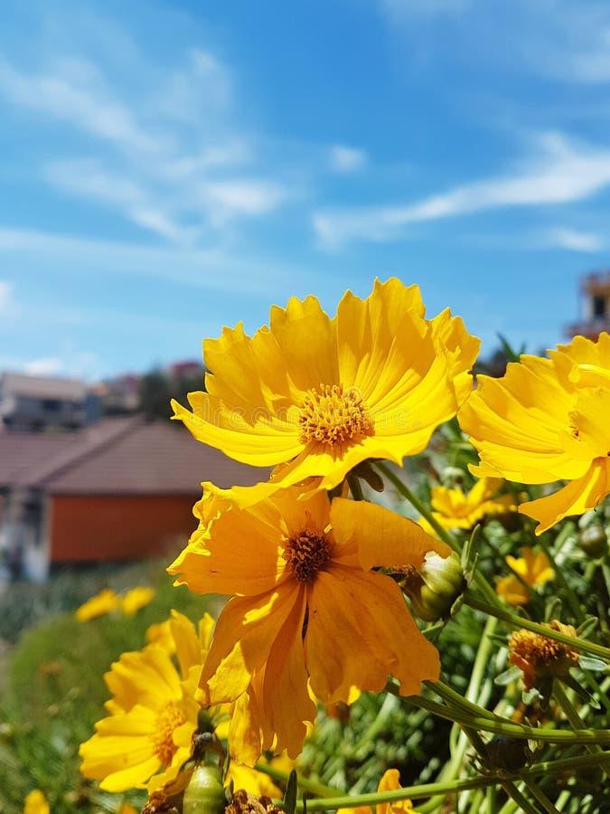 Majestic Yellow Flower royalty free stock photo