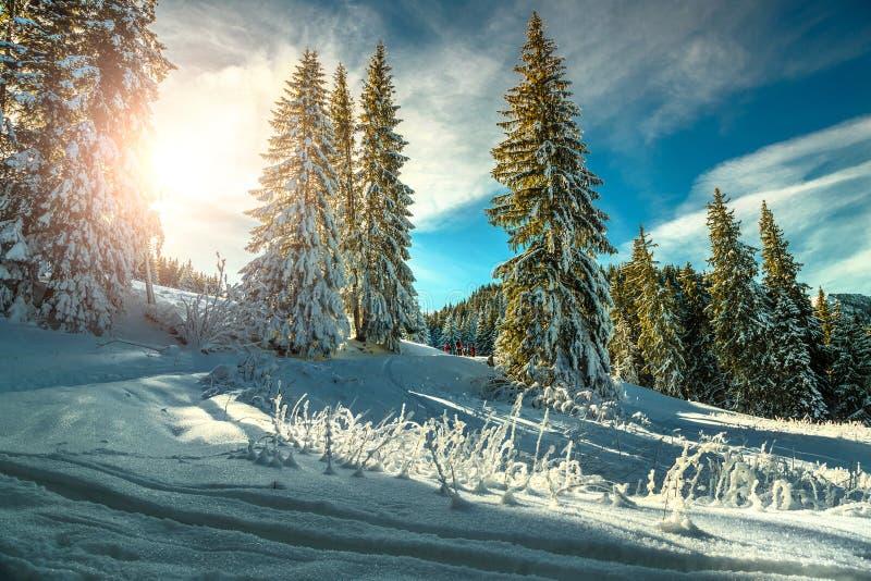 Majestueus de winterlandschap met sneeuwbomen en bos, Transsylvanië, Roemenië stock foto