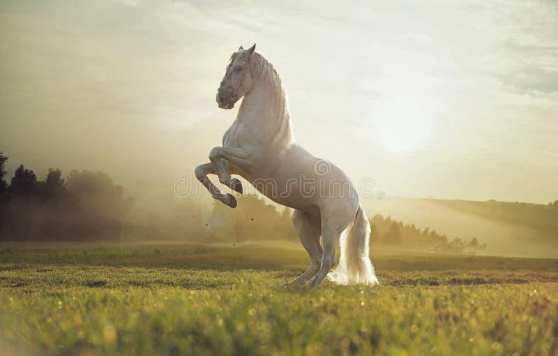 Majestueuze foto van koninklijk wit paard royalty-vrije stock afbeelding