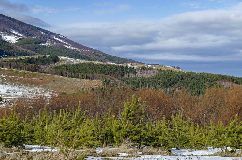 Majestueuze mening van bewolkte hemel, de winterberg, sneeuwopen plek, naaldboom en vergankelijk bos van Plana-berg naar Vitosha royalty-vrije stock fotografie