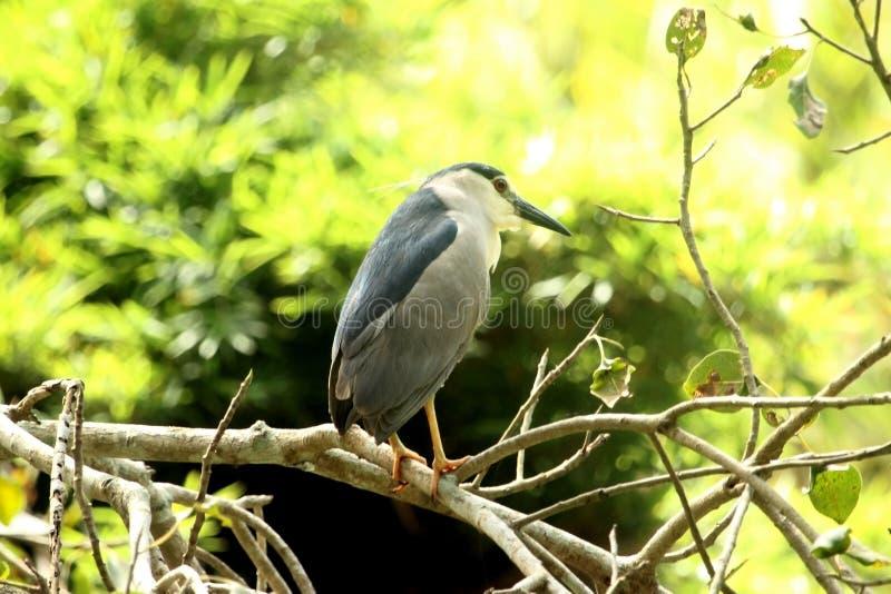Majestueuze vogel royalty-vrije stock foto's
