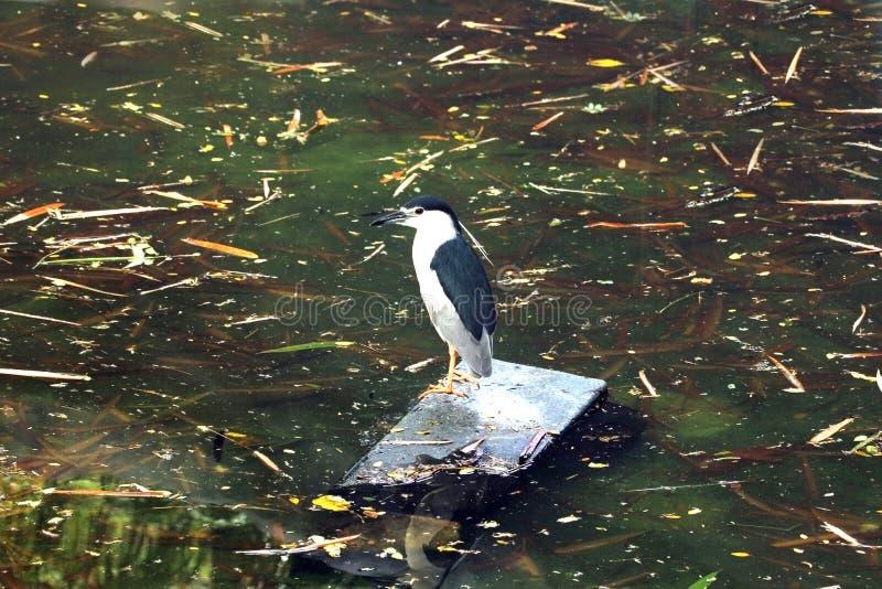 Majestueuze vogel stock foto's