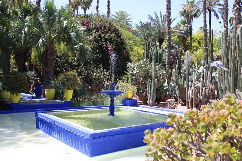 Majorelle庭院-马拉喀什 库存图片