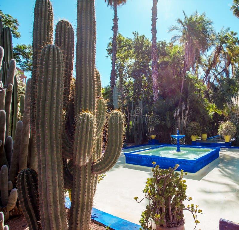 Majorelle ogr?d w Marrakech, Maroko zdjęcie royalty free