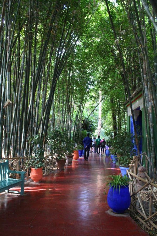 Majorelle uprawia ogródek - gości w bambusowym lesie fotografia stock