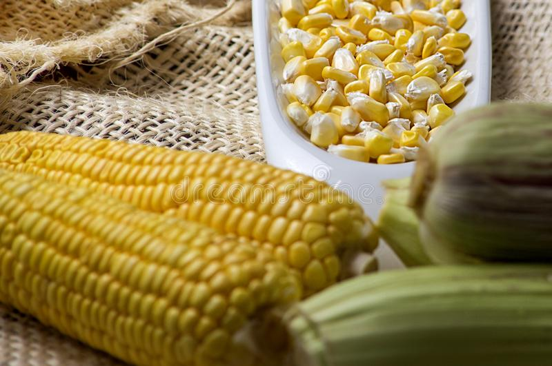 Majsöron av gul havre med korn i en vit bunke - zea maj arkivbilder
