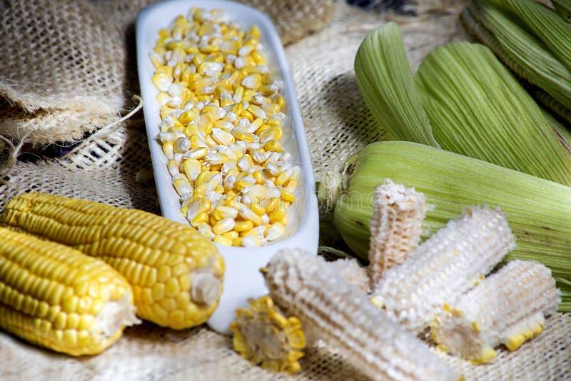 Majsöron av gul havre med korn i en vit bunke - zea maj arkivfoton