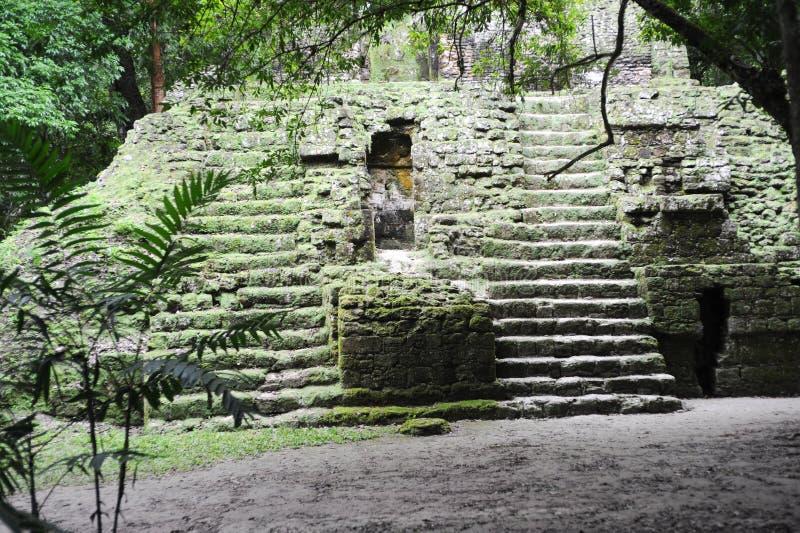 Majskie ruiny Tikal zdjęcie royalty free