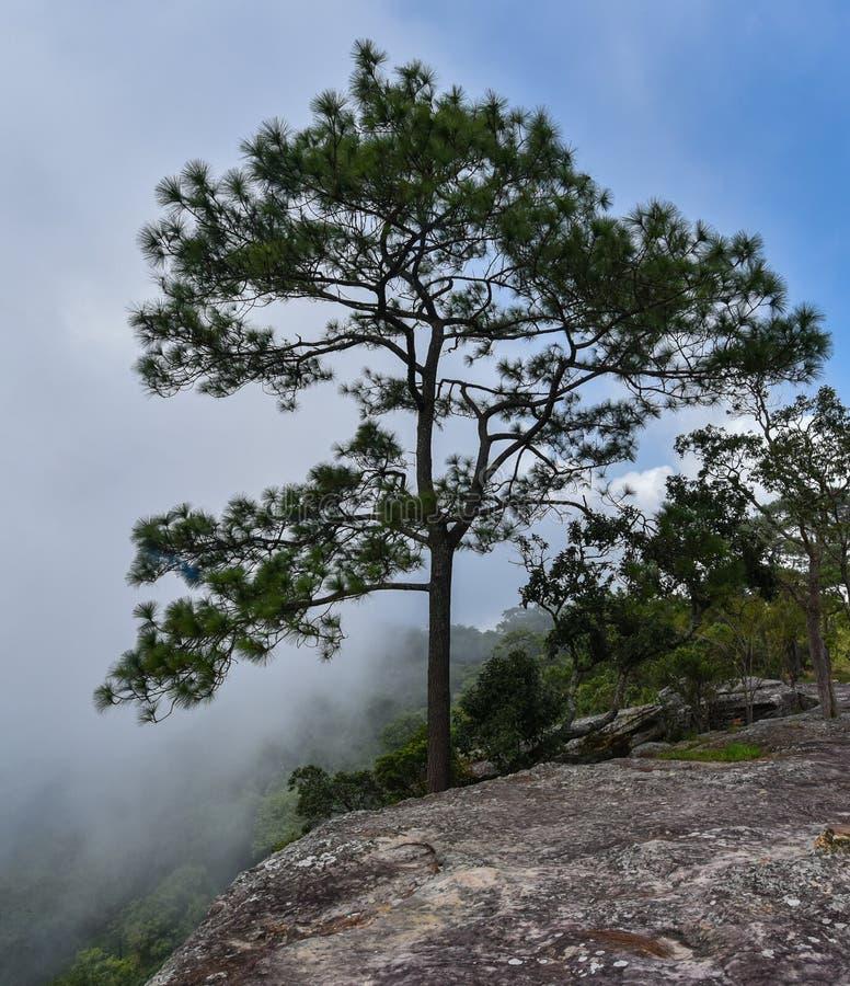 Mak Dook Cliff fotografie stock libere da diritti