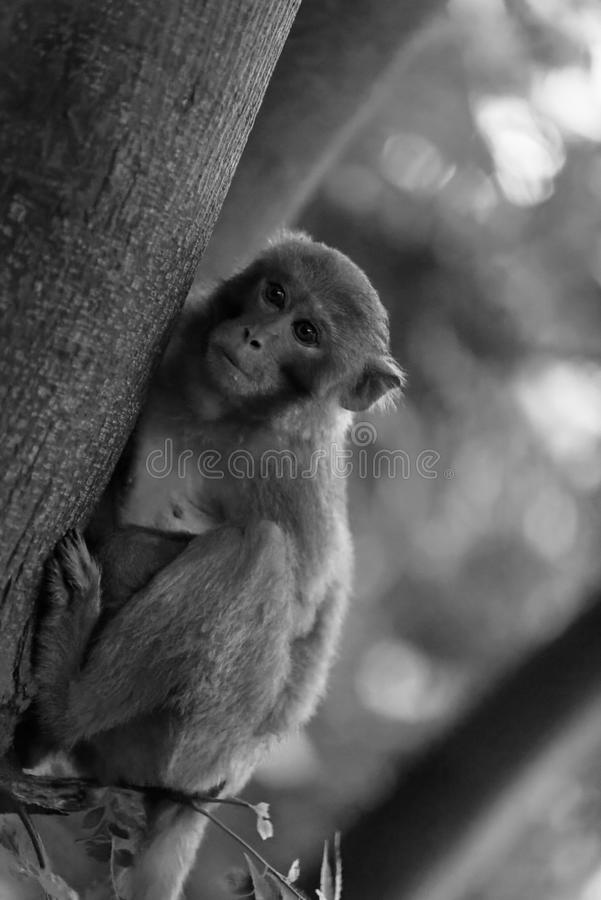 Makak małpa, da nang, Wietnam zdjęcie royalty free