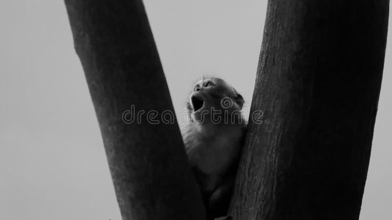 Makakenaffe im Baum, Da Nang, Vietnam stockfotos